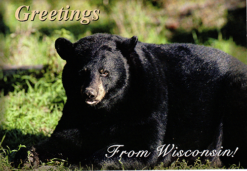 146 WI Bear Post Card